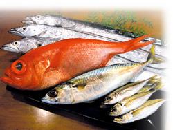 房州・保田より仕入れる新鮮な魚介 画像